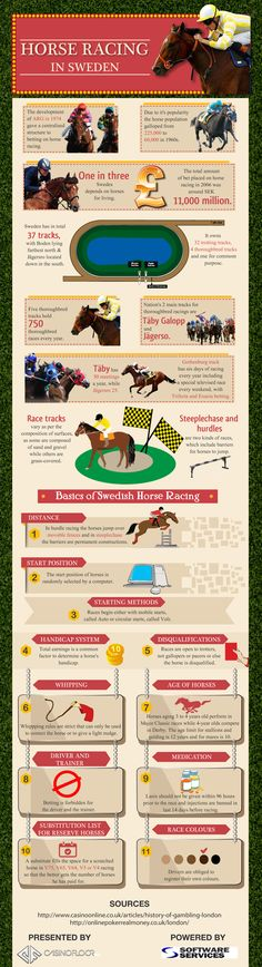 Horse betting basics: how to bet at the racetrack infographic number of